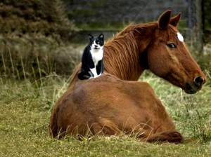 Yes...It's a cat on a horse.